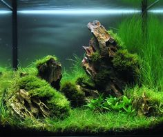 The Rocky Plain par Greg78520 #aquascaping #aquarium #fishtank