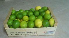 10 kg limón fino_verdoso-amarillo  www.ventadelimones.es  Para relamerse!!
