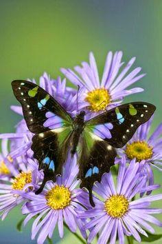 Flores e borboleta.