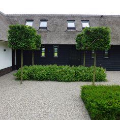 block planted greenery and pleached trees | gravel drive || Moderne tuinen blokbomen taxushagen www.hendrikshoveniers.nl