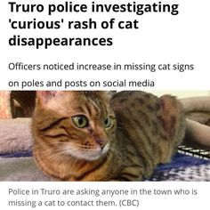 """From @cbcns  A rash of missing cats in the Truro area has led the local police force to open an investigation. . Truro Police Chief David MacNeil says his officers have recently noticed an increase in the number of missing cat flyers posted on telephone and power poles in the Nova Scotia town. . """"That was a little curious to begin with"""" he told CBC's Maritime Noon. . Officers also noticed frequent posts on social media about missing cats. . """"In an effort to be proactive we thought we would…"""