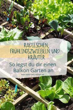 """""""Urban Gardening"""" ist voll im Trend. Ein Garten auf der Fensterbank mit Kräutern ist ein erster Schritt. Ein Minigarten auf dem Balkon einer Stadtwohnung wird zur Wohlfühloase. Wenn du gern Gemüse auf dem Balkon anbauen willst, solltest du diesen Blog Artikel lesen. Wir verraten dir hier, welche Gemüsepflanzen problemlos für sonnige, windgeschützte und trockene Balkone geeignet sind. Wie wäre es mit Buschbohnen und Tomaten beispielsweise? Mini Garten, Gemüse auf dem Balkon #edel-naturwaren.de Urban Gardening, Plants, Edible Plants, Large Backyard, Planting, Organic Beauty, Fresh, City Gardens, Plant"""