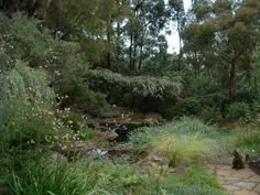 Warranwood swimming pool conversion to pond system Pond Design, Landscape Design, Garden Design, Backyard Water Feature, Ponds Backyard, Pond Landscaping, Landscaping With Rocks, Australian Native Garden, Natural Pond