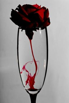 Red Roses - created on Blood Wallpaper, Rose Wallpaper, Dark Photography, Creative Photography, Imagine Photography, Bleeding Rose, Rose Blood, Blood Art, Red Aesthetic