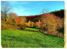 Precioso lugar para un buen paseo... las praderas del valle de Arce, #Navarra