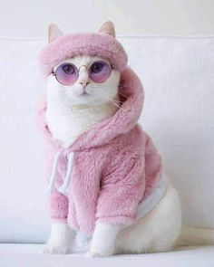 Cute Animals And Their Names toward List Of Cute Animals With Pictures these Wallpaper With Cute Animals On It Cute Baby Cats, Cute Cats And Kittens, Cute Funny Animals, Cute Baby Animals, I Love Cats, Crazy Cats, Cool Cats, Kittens Cutest, Funny Cats