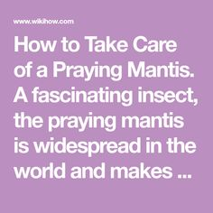 How to Take Care of a Praying Mantis. A fascinating insect, the praying mantis is widespread in the world and makes an awesome choice for a pet. Even people who don't like a lot of bugs can be persuaded to enjoy the antics of a praying...