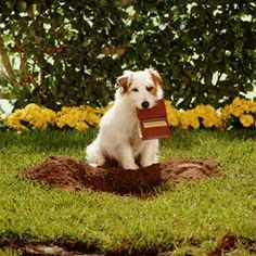 March 12 is Plant a Flower Day. Before heading into the garden, be sure landscaping products and plants are safe for pets! #garden #plants