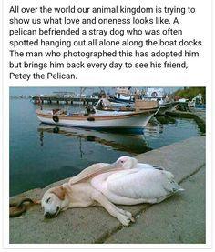 LOVE KNOWS NO BOUNDS! ... Different Species should not, does not define friendships ...We have so much to learn from Animals. http://www.inner-being.eu