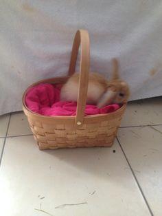 . Plastic Laundry Basket, Bunny, Organization, Home Decor, Getting Organized, Cute Bunny, Organisation, Decoration Home, Room Decor