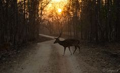 Pench National Park,India