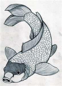 Lucky Koi drawing