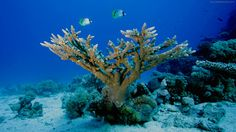 fundo do mar - Pesquisa Google