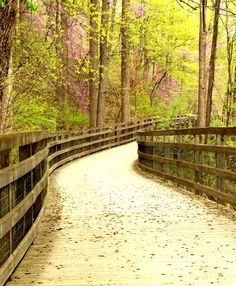 The Saunders-Monticello Trail in Charlottesville