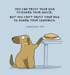 Cant trust the dog with your sandwich, 🍕 , or 🌭 Cat Love, I Love Dogs, Puppy Love, Cute Dogs, Dog Quotes Funny, Funny Dogs, Cute Funny Animals, Funny Cute, Hilarious
