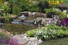 Backyard water garden.