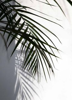 Shadow Julisteet ryhmässä Julisteet  / Koot / 40x50cm @ Desenio AB (8852)