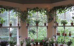 ♥ - add glass shelves to my windows