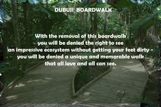Recently as of the date of this blog the State Government apparatus has elected to remove more essential services from the area. Specifically, the Dubuji Boardwalk. With the removal of this boardwalk you will be denied the right to see an impressive ecosystem without getting your feet dirty – you will be denied a unique and memorable walk that all love and all can see.