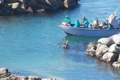 Foto's: Swemmende volstruise by Yzerfontein | Maroela Media
