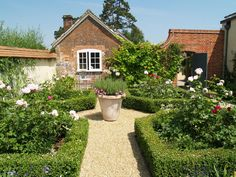 Breedon gravel path with Italian terrace vase, framed by box hedging