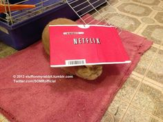 Netflix, Stuff on My Rabbit http://sulia.com/my_thoughts/cc2be042-2da5-4de9-be9b-68f556380821/?pinner=undefined