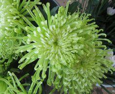 Green Fujis