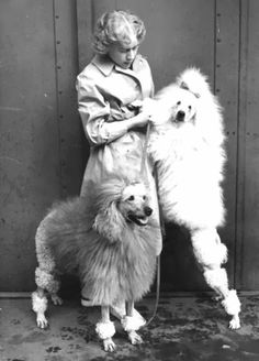 Vintage Doggy: Poodles From The Past