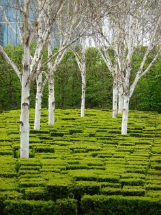 "wallacegardens: ""Boxwood and Birch, Parc André Citroën, Paris, France. This is one of the public garden projects that Gilles Clément was involved in (along with landscape designer Alain Provost and..."