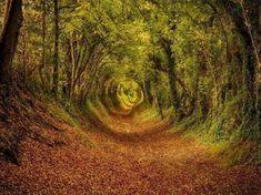 Ashdown-forest-inglaterra