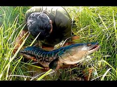 The Fishing in River   Traditional Khmer Fishing   Cambodia Fishing Part...