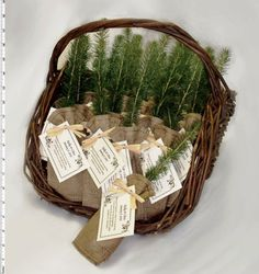 Pine Tree Sapling Wedding Favors!