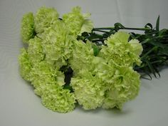 Bunches for Africa Western Cape - flowers, decor and function warehouse. Green Carnation, Buy Flowers Online, Wedding Consultant, Flower Tutorial, Carnations, Cut Flowers, Bouquet, Fresh, Bridal