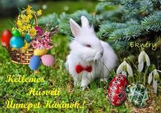 Quiches, Rabbit, Decoration, Spring, Animals, Easter Activities, Bunny, Decor, Rabbits