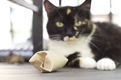 make this fun DIY Cat Food Puzzle toy for your foodie feline. You have all you ned to make this DIY Cat Food Puzzle toy at home.