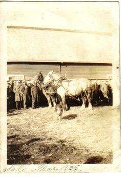 Auction of our family farm including horses in 1935