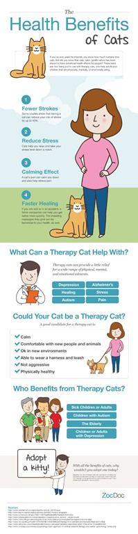 health benefits of cats infographic