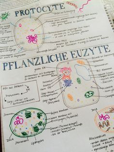 """motivationstudium: """"I love taking notes for cell biology because I always get to use so many colours! Planner Tumblr, Biology College, Pretty Notes, Beautiful Notes, Cell Biology, School Notes, College Notes, Study Hard, Note Taking"""