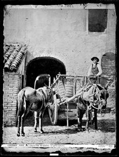 Carro con mulas. Jean Laurent 1863-1872. Cortesía: Rafael Pulido Jurado. Guadalcázar, Córdoba (España)