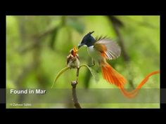 10 Most Beautiful Birds in Pakistan -  #bird #animals #bird_watchers_daily #animal #birdwatching #pets #nature_seekers #birdlovers Dog Training – The Perfect Pooch System!  Click HERE! ever, kabaddi, india, sports, cricket, news, indian vs pakistan, funny video 2016, prank video 2016, latest prank video, latest funny video,... - #Birds
