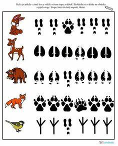 Animal Activities, Preschool Learning Activities, Preschool Science, Teaching Kids, Woodland Animals Theme, Forest Animals, Animal Footprints, March Themes, File Folder Activities