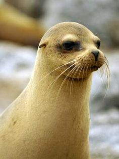 Nice Seal!
