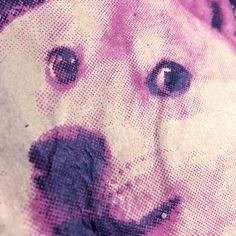 #verywow #muchskills #screenprintyes #doge🐶This Saturday join us for an all day Screen Printing for Beginners Class! 18 March. Learn to take a piece of artwork of your choosing (Like an image of #doge 😄), expose it onto a screen using photo emulsion and uv light, then print onto your choice of surface: fabric or paper. You'll receive a complimentary t-shirt, tote bag, tea towel or 5 x sheets of poster card to print onto, as your project for the day 👍 Book today! Day Book, Doge, Screen Printing, Surface, March, Ink, Tote Bag, Learning, Paper