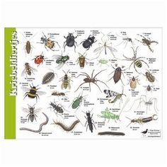 per 5 Animals Of The World, Animals For Kids, Insect Identification, After School Care, Girl Scout Camping, School Readiness, Bugs And Insects, Fauna, Science For Kids