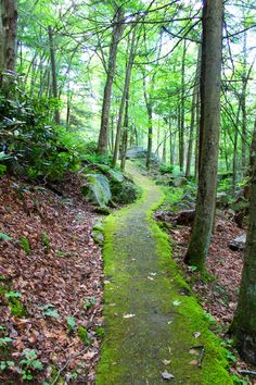 Babcock State Park, Mossy Trail, West Virginia, Hiking, New River Gorge