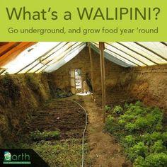 Wallipini