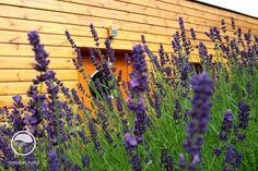 #landscape #architecture #garden #meadow Meadow Garden, Land Scape, Plants, Landscape Architecture, Atelier, Plant, Planets, Landscape Design, Landscape Art