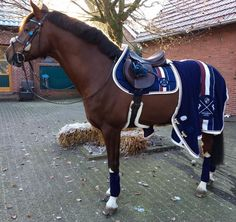 Eskadron Heritage Just Blue❤ - Eskadron❤& more - Pferde Equestrian Boots, Equestrian Outfits, Equestrian Style, Equestrian Problems, Riding Hats, Horse Riding, Riding Helmets, Horse Gear, Horse Tack