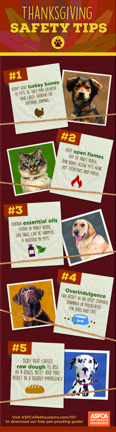 Here are some suggestions to help make sure your celebrations are safe for your pet.