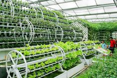 Aquaponics - aquaponics | Aquaponics Pictures | Aqua Botantical - Break-Through Organic Gardening Secret Grows You Up To 10 Times The Plants, In Half The Time, With Healthier Plants, While the Fish Do All the Work... And Yet... Your Plants Grow Abundantly, Taste Amazing, and Are Extremely Healthy